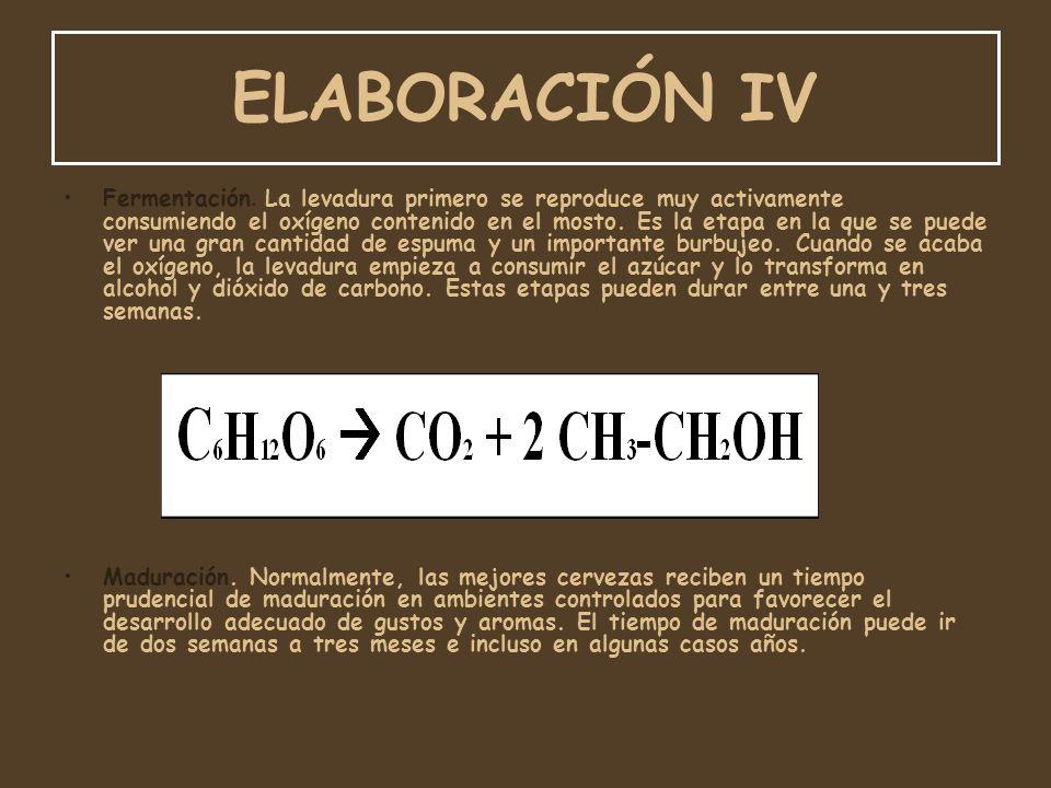 ELABORACIÓN IV Fermentación. La levadura primero se reproduce muy activamente consumiendo el oxígeno contenido en el mosto. Es la etapa en la que se p