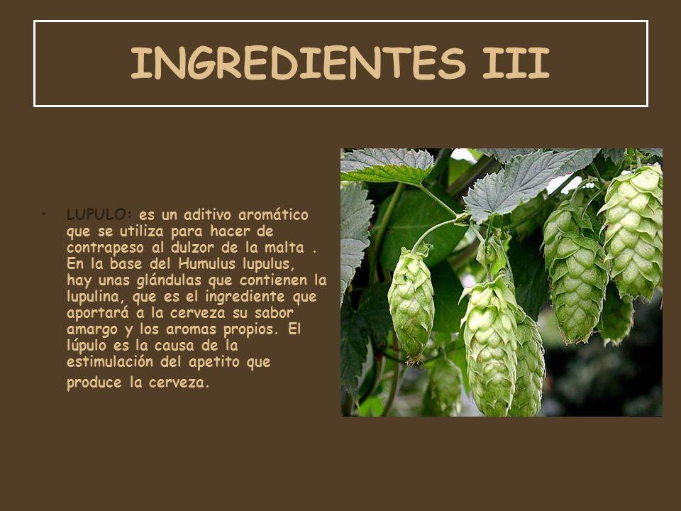 INGREDIENTES III LUPULO: es un aditivo aromático que se utiliza para hacer de contrapeso al dulzor de la malta. En la base del Humulus lupulus, hay un