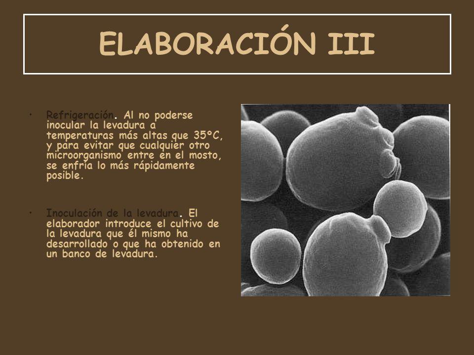 ELABORACIÓN III Refrigeración. Al no poderse inocular la levadura a temperaturas más altas que 35ºC, y para evitar que cualquier otro microorganismo e