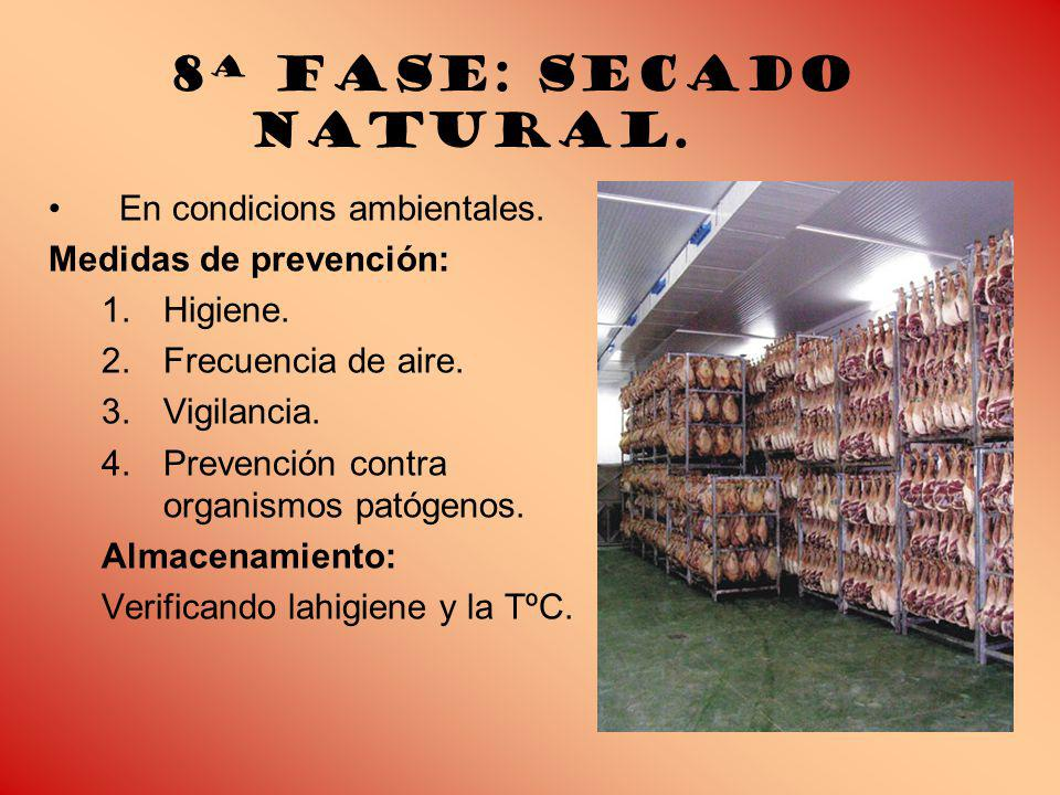 8ª Fase: Secado natural.En condicions ambientales.