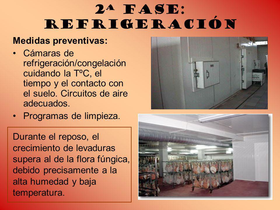 2ª Fase: Refrigeración Medidas preventivas: Cámaras de refrigeración/congelación cuidando la TºC, el tiempo y el contacto con el suelo.