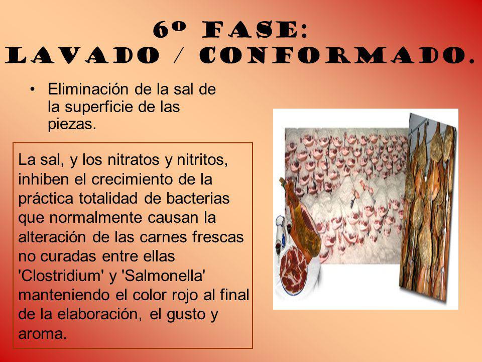 6º Fase: Lavado / conformado.Eliminación de la sal de la superficie de las piezas.