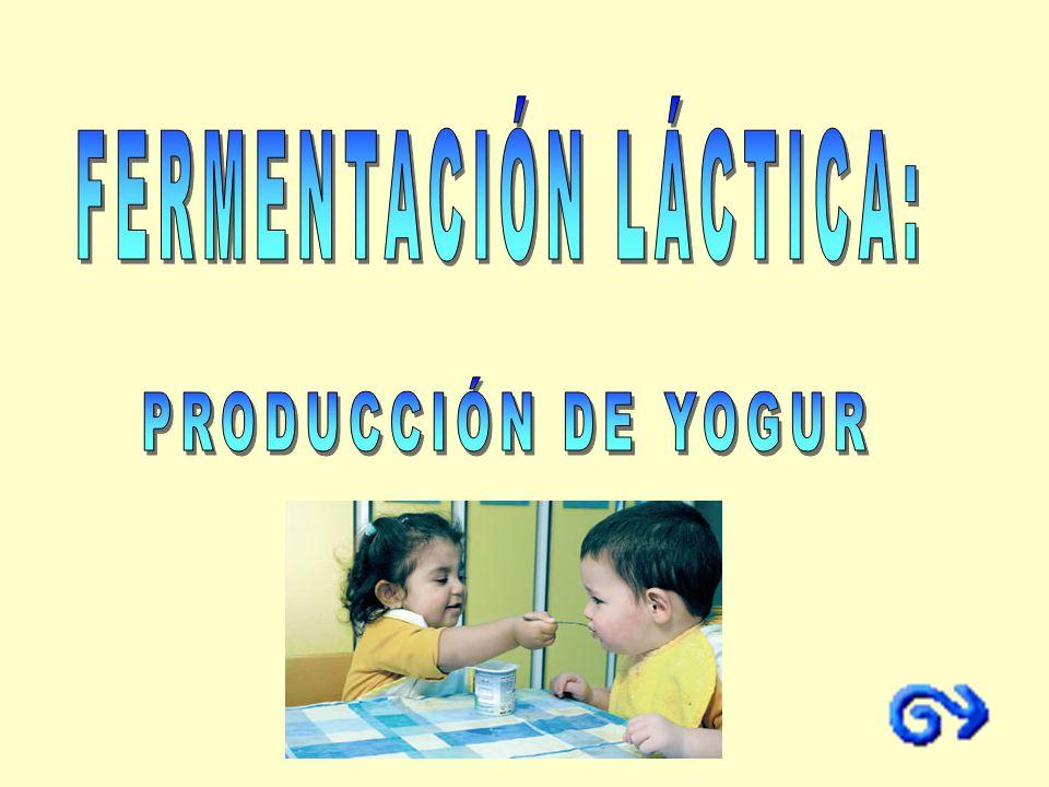 Proceso anaeróbico. Bacterias lácticas: Lactobacillus, Streptococcus y Lactococcus.