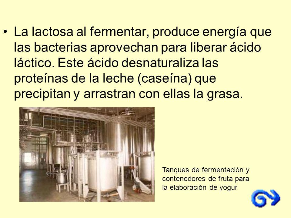 La lactosa al fermentar, produce energía que las bacterias aprovechan para liberar ácido láctico. Este ácido desnaturaliza las proteínas de la leche (