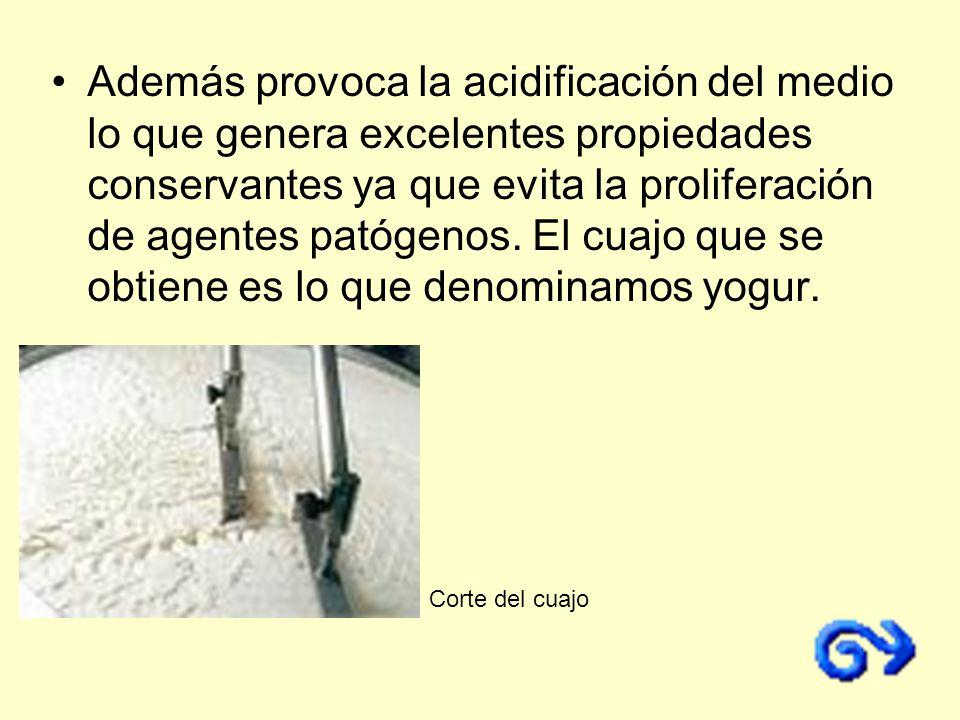 Además provoca la acidificación del medio lo que genera excelentes propiedades conservantes ya que evita la proliferación de agentes patógenos. El cua