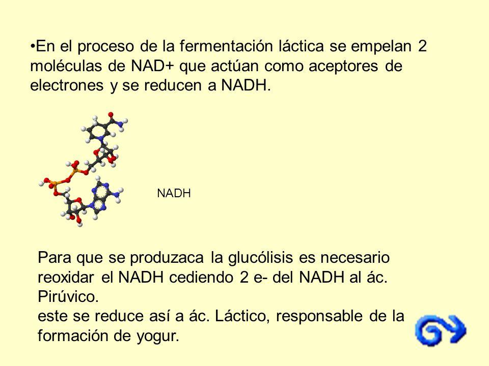 Para que se produzaca la glucólisis es necesario reoxidar el NADH cediendo 2 e- del NADH al ác. Pirúvico. este se reduce así a ác. Láctico, responsabl