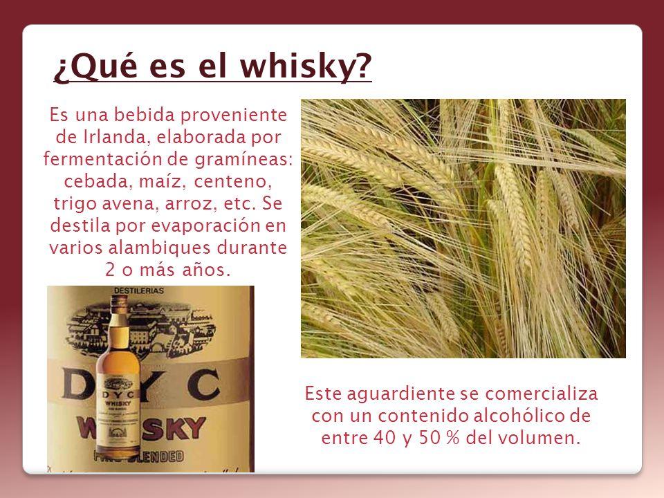 ¿Qué es el whisky? Es una bebida proveniente de Irlanda, elaborada por fermentación de gramíneas: cebada, maíz, centeno, trigo avena, arroz, etc. Se d