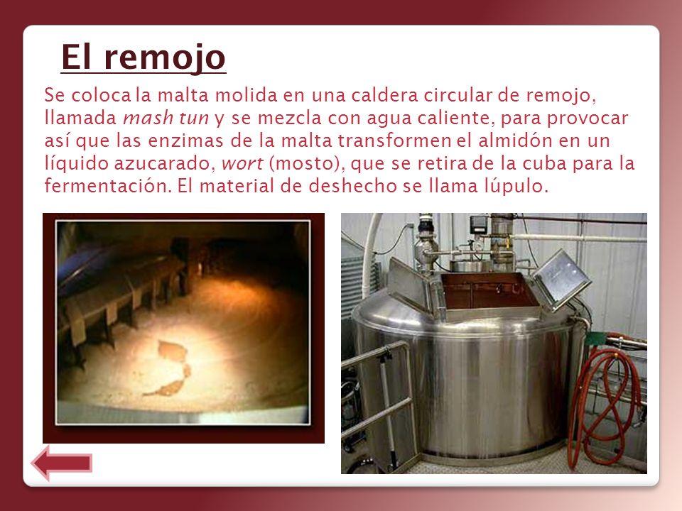 Se coloca la malta molida en una caldera circular de remojo, llamada mash tun y se mezcla con agua caliente, para provocar así que las enzimas de la m