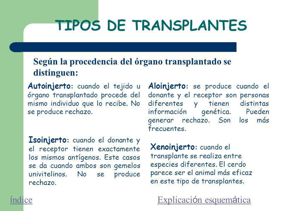 TIPOS DE TRANSPLANTES Autoinjerto : cuando el tejido u órgano transplantado procede del mismo individuo que lo recibe.