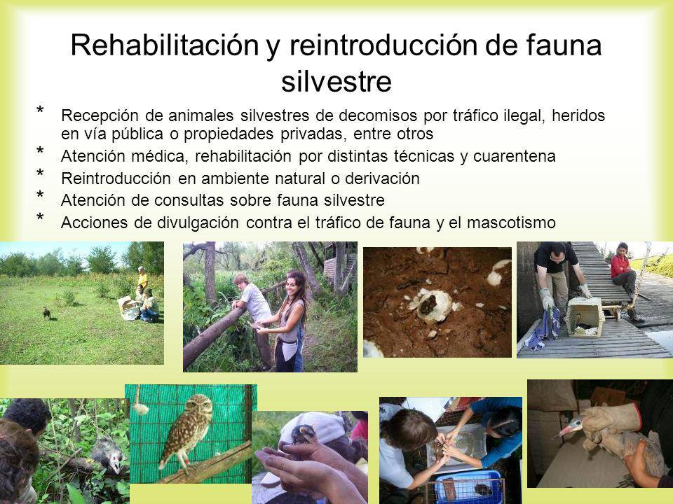 Rehabilitación y reintroducción de fauna silvestre * Recepción de animales silvestres de decomisos por tráfico ilegal, heridos en vía pública o propie