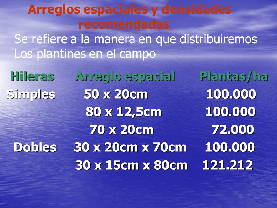Hileras Arreglo espacial Plantas/ha Hileras Arreglo espacial Plantas/ha Simples 50 x 20cm 100.000 Simples 50 x 20cm 100.000 80 x 12,5cm 100.000 80 x 1