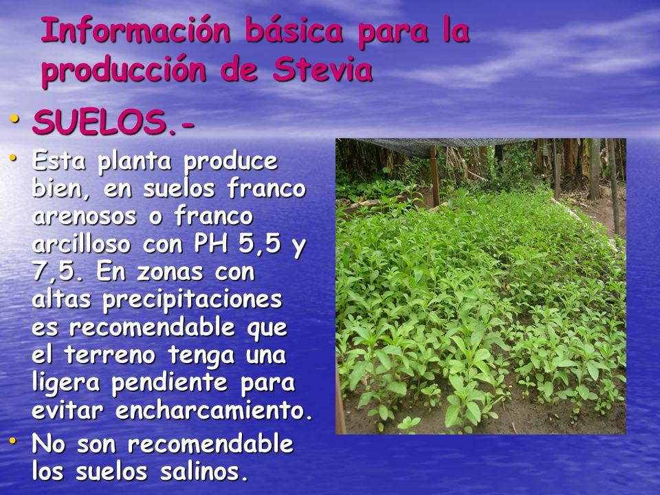 Información básica para la producción de Stevia SUELOS.- SUELOS.- Esta planta produce bien, en suelos franco arenosos o franco arcilloso con PH 5,5 y