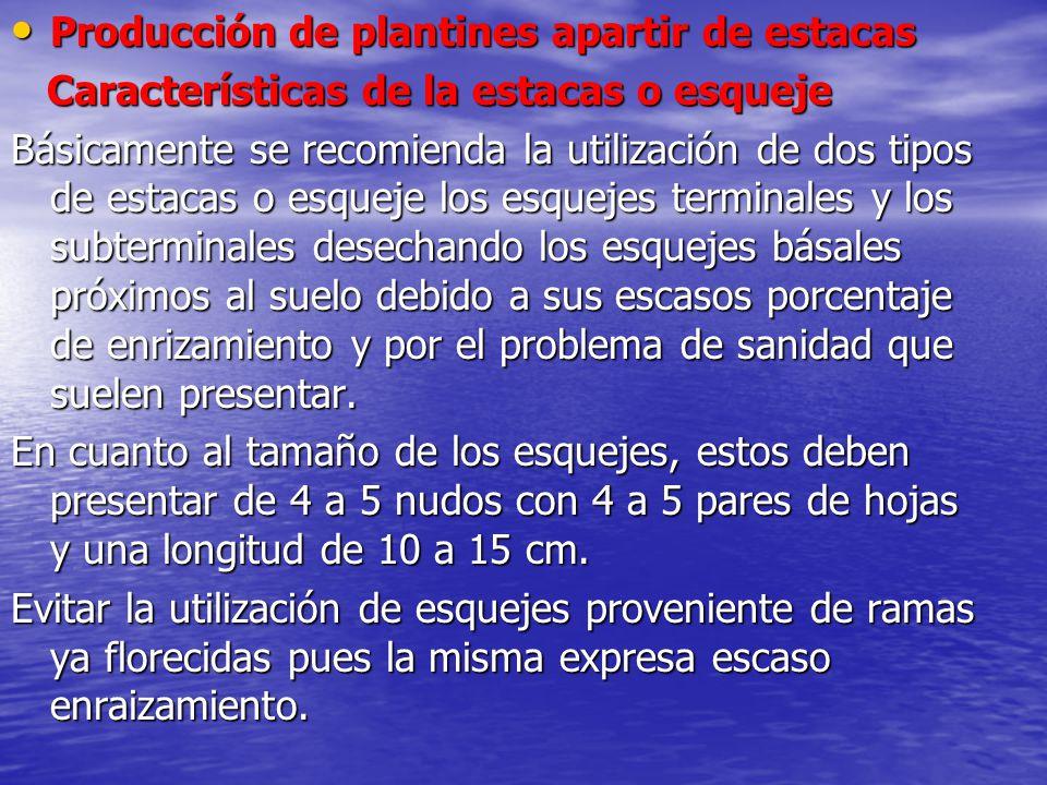 Producción de plantines apartir de estacas Producción de plantines apartir de estacas Características de la estacas o esqueje Características de la es