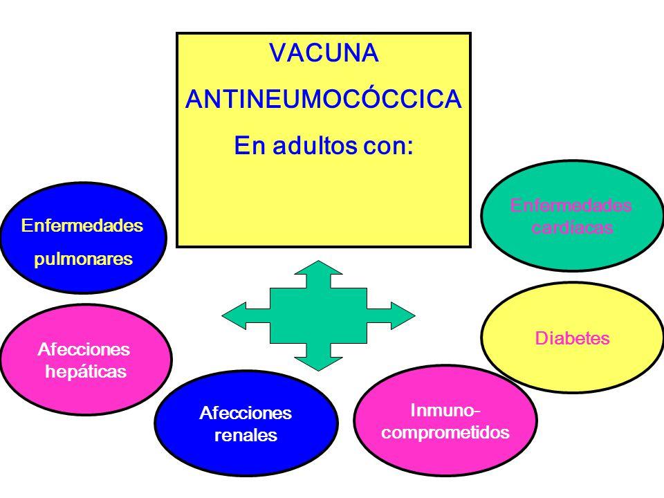 VACUNA ANTINEUMOCÓCCICA En adultos con: Enfermedades pulmonares Enfermedades cardíacas Afecciones hepáticas Afecciones renales Inmuno- comprometidos Diabetes