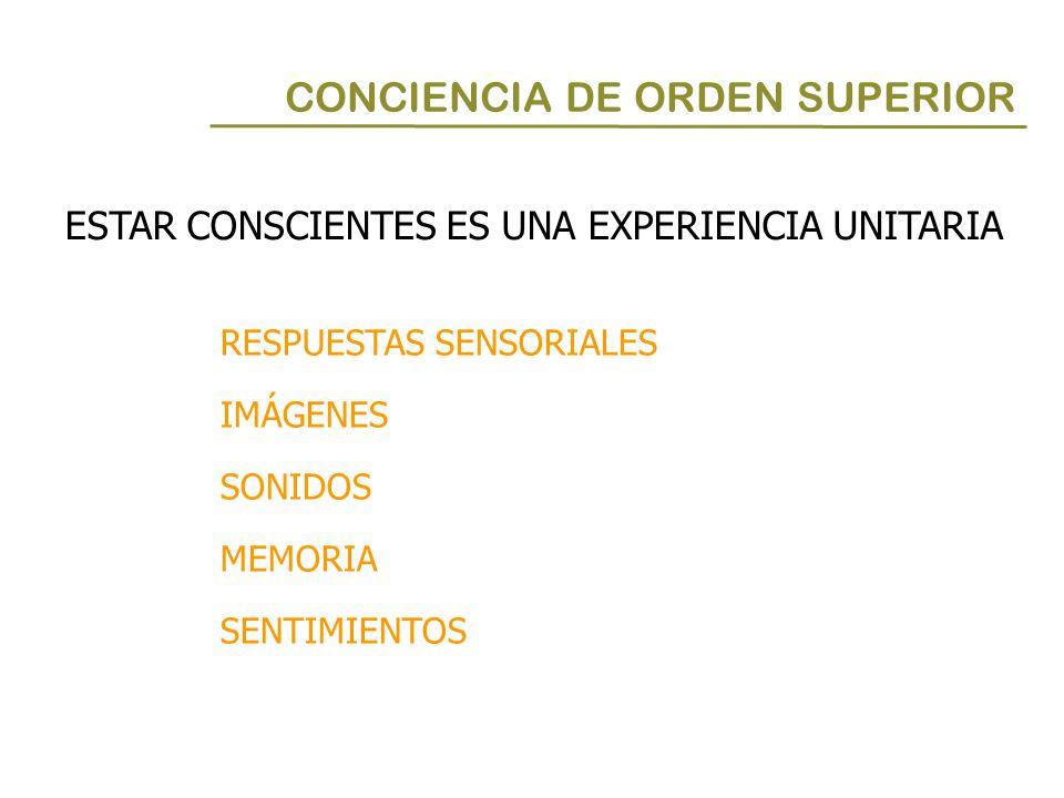 RESPUESTAS SENSORIALES IMÁGENES SONIDOS MEMORIA SENTIMIENTOS ESTAR CONSCIENTES ES UNA EXPERIENCIA UNITARIA CONCIENCIA DE ORDEN SUPERIOR