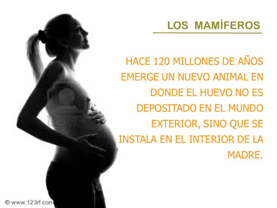 LOS MAMÍFEROS HACE 120 MILLONES DE AÑOS EMERGE UN NUEVO ANIMAL EN DONDE EL HUEVO NO ES DEPOSITADO EN EL MUNDO EXTERIOR, SINO QUE SE INSTALA EN EL INTE