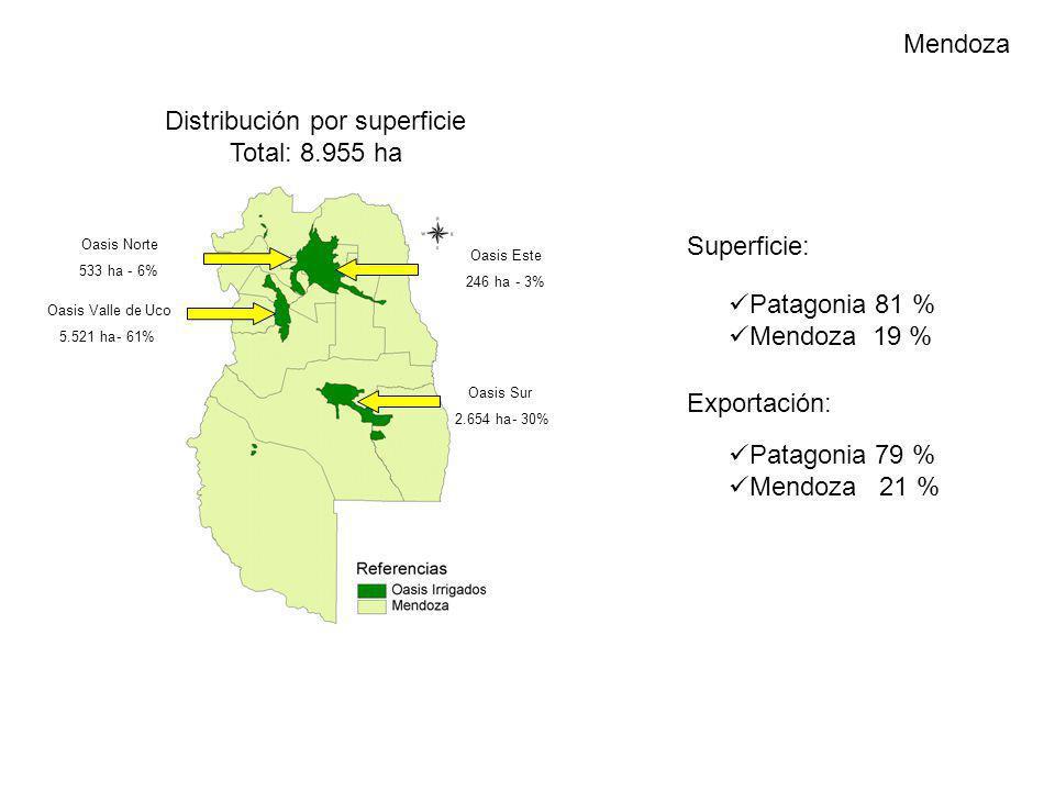 Mendoza Patagonia 81 % Mendoza 19 % Superficie: Exportación: Distribución por superficie Total: 8.955 ha Oasis Norte 533 ha-6% Oasis Valle de Uco 5.52