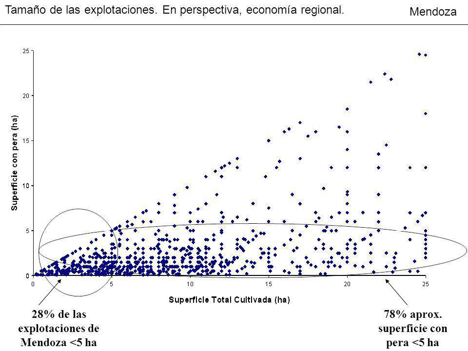 28% de las explotaciones de Mendoza <5 ha 78% aprox. superficie con pera <5 ha Tamaño de las explotaciones. En perspectiva, economía regional. Mendoza