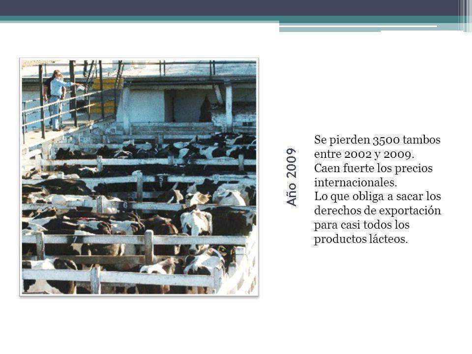 Año 2009 Se pierden 3500 tambos entre 2002 y 2009. Caen fuerte los precios internacionales. Lo que obliga a sacar los derechos de exportación para cas
