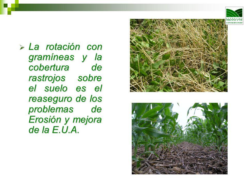 La rotación con gramíneas y la cobertura de rastrojos sobre el suelo es el reaseguro de los problemas de Erosión y mejora de la E.U.A. La rotación con