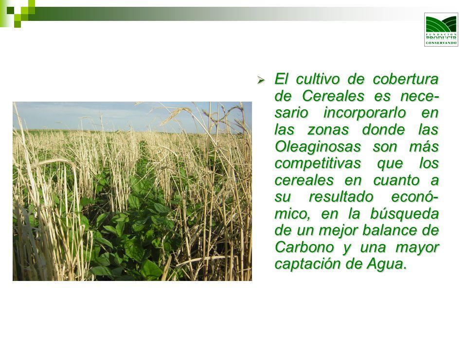 El cultivo de cobertura de Cereales es nece- sario incorporarlo en las zonas donde las Oleaginosas son más competitivas que los cereales en cuanto a s
