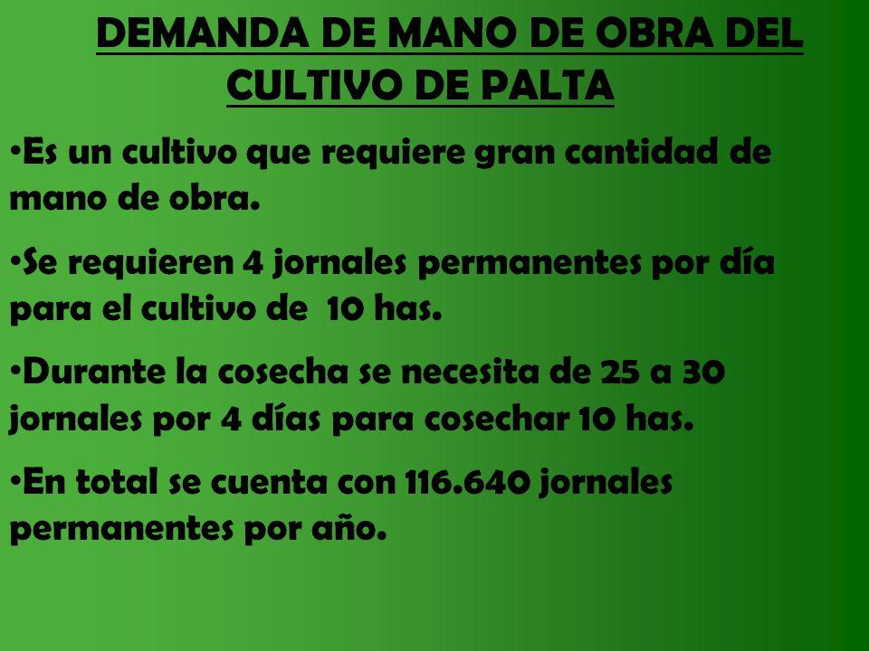 DEMANDA DE MANO DE OBRA DEL CULTIVO DE PALTA Es un cultivo que requiere gran cantidad de mano de obra. Se requieren 4 jornales permanentes por día par