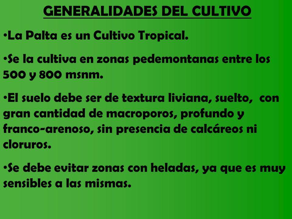 GENERALIDADES DEL CULTIVO La Palta es un Cultivo Tropical. Se la cultiva en zonas pedemontanas entre los 500 y 800 msnm. El suelo debe ser de textura