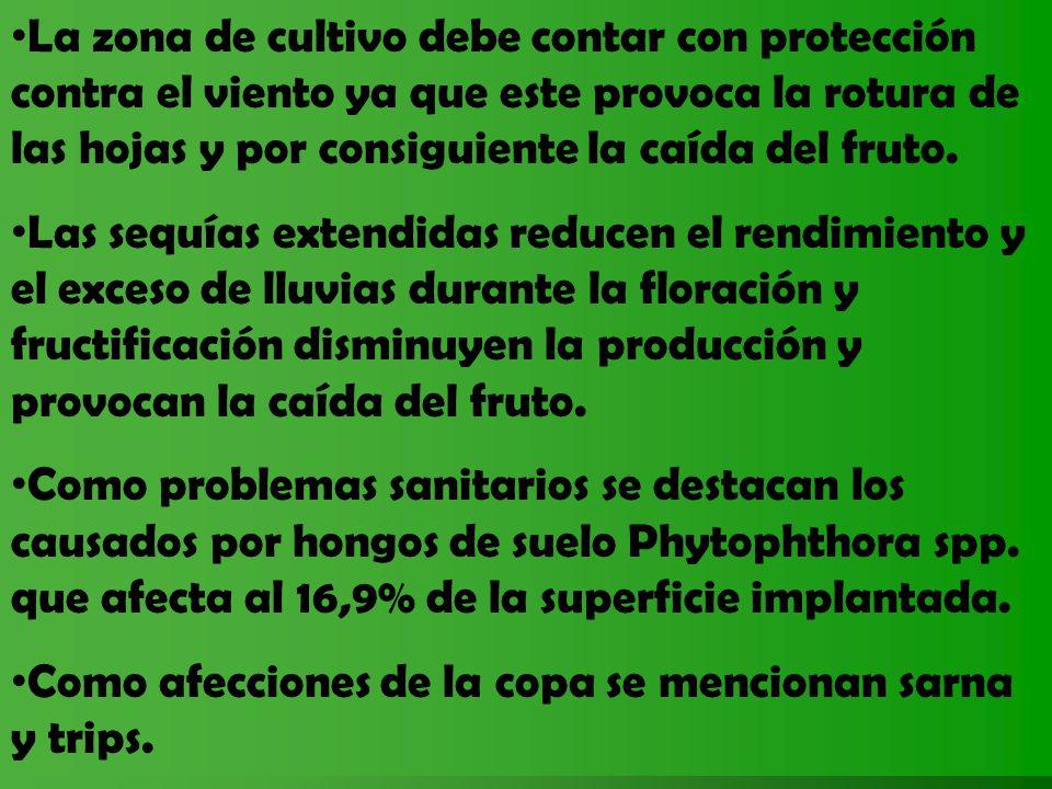 PROPUESTAS PARA MEJORAR EL MERCADO INTERNO Desarrollar el conocimiento del producto y sus valores nutricionales.