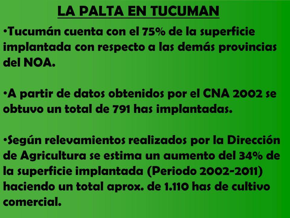 LA PALTA EN TUCUMAN Tucumán cuenta con el 75% de la superficie implantada con respecto a las demás provincias del NOA. A partir de datos obtenidos por