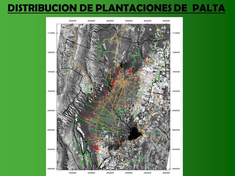 LA OFERTA PROYECTADA Y REAL 2011 DE PALTA EN EL MERCADO EUROPEO