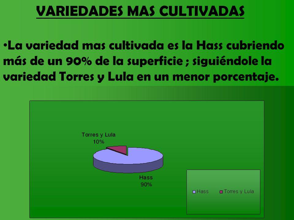 VARIEDADES MAS CULTIVADAS La variedad mas cultivada es la Hass cubriendo más de un 90% de la superficie ; siguiéndole la variedad Torres y Lula en un