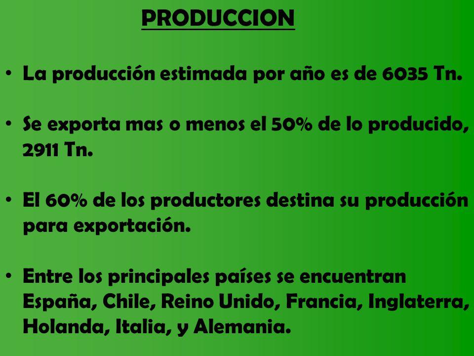 PRODUCCION La producción estimada por año es de 6035 Tn. Se exporta mas o menos el 50% de lo producido, 2911 Tn. El 60% de los productores destina su
