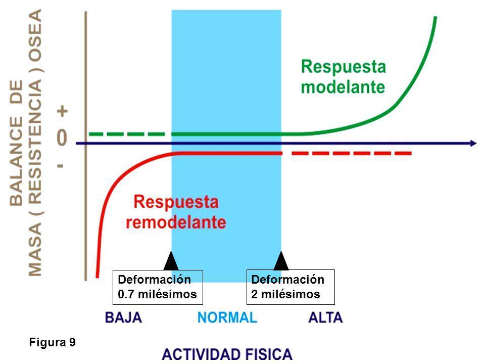 Figura 9 Deformación 0.7 milésimos Deformación 2 milésimos
