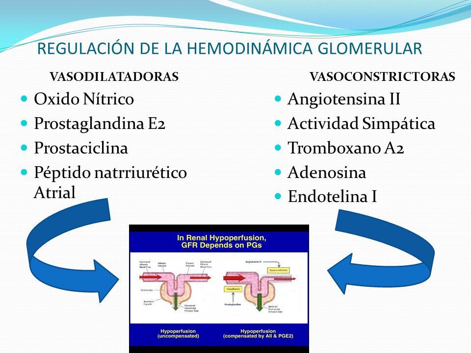 REGULACIÓN DE LA HEMODINÁMICA GLOMERULAR VASOCONSTRICTORAS Angiotensina II Actividad Simpática Tromboxano A2 Adenosina Endotelina I VASODILATADORAS Ox