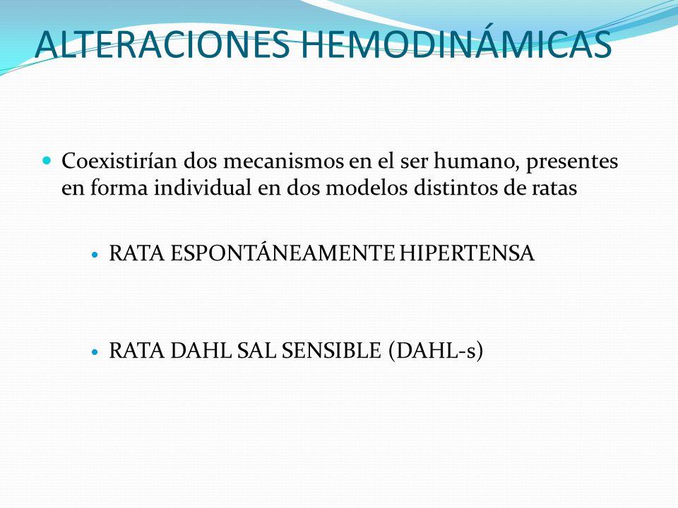 ALTERACIONES HEMODINÁMICAS Coexistirían dos mecanismos en el ser humano, presentes en forma individual en dos modelos distintos de ratas RATA ESPONTÁN