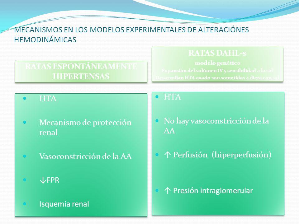 MECANISMOS EN LOS MODELOS EXPERIMENTALES DE ALTERACIÓNES HEMODINÁMICAS RATAS ESPONTÁNEAMENTE HIPERTENSAS RATAS DAHL-s modelo genético Expansión del vo