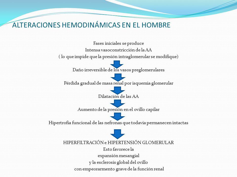 ALTERACIONES HEMODINÁMICAS EN EL HOMBRE Fases iniciales se produce Intensa vasoconstricción de la AA ( lo que impide que la presión intraglomerular se
