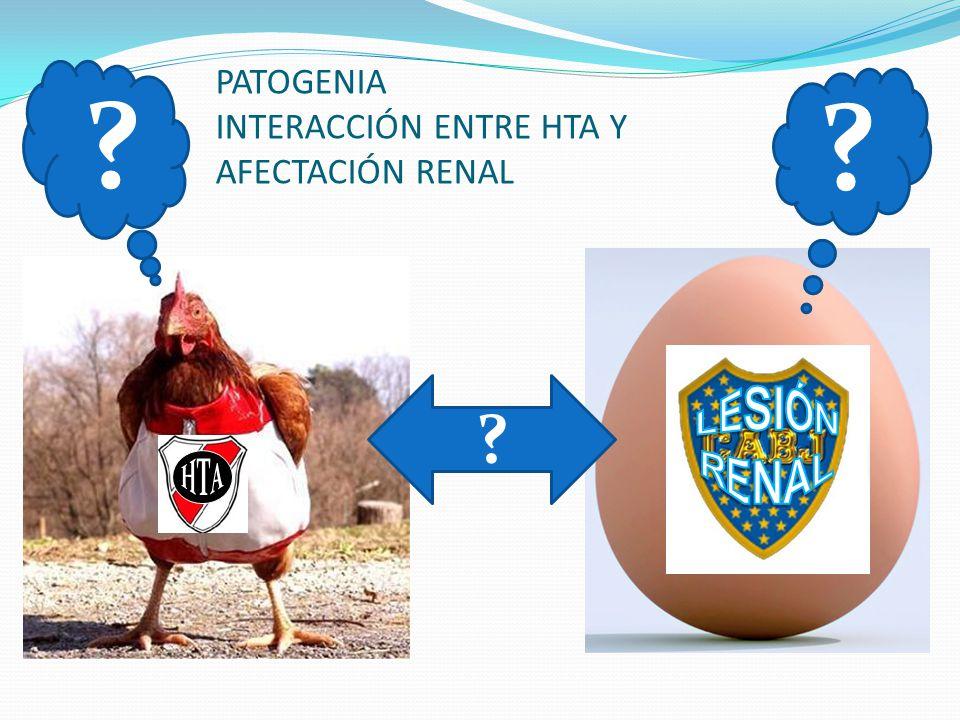 MECANISMOS EN LOS MODELOS EXPERIMENTALES DE ALTERACIÓNES HEMODINÁMICAS RATAS ESPONTÁNEAMENTE HIPERTENSAS RATAS DAHL-s modelo genético Expansión del volúmen IV y sensibilidad a la sal Desarrollan HTA cuado son sometidas a dieta con sal RATAS DAHL-s modelo genético Expansión del volúmen IV y sensibilidad a la sal Desarrollan HTA cuado son sometidas a dieta con sal HTA Mecanismo de protección renal Vasoconstricción de la AA FPR Isquemia renal HTA Mecanismo de protección renal Vasoconstricción de la AA FPR Isquemia renal HTA No hay vasoconstricción de la AA Perfusión (hiperperfusión) Presión intraglomerular HTA No hay vasoconstricción de la AA Perfusión (hiperperfusión) Presión intraglomerular