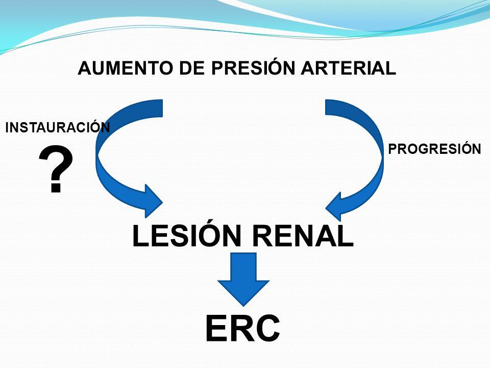ALTERACIONES HEMODINÁMICAS EN EL HOMBRE Fases iniciales se produce Intensa vasoconstricción de la AA ( lo que impide que la presión intraglomerular se modifique) Daño irreversible de los vasos preglomerulares Pérdida gradual de masa renal por isquemia glomerular Dilatación de las AA Aumento de la presión en el ovillo capilar Hipertrofia funcional de las nefronas que todavía permanecen intactas HIPERFILTRACIÓN e HIPERTENSIÓN GLOMERULAR Esto favorece la expansión mesangial y la esclerosis global del ovillo con empeorarmento grave de la función renal