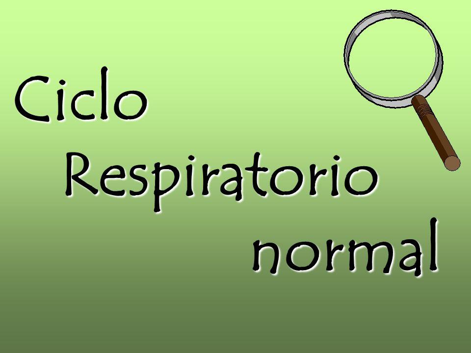CicloRespiratorionormal