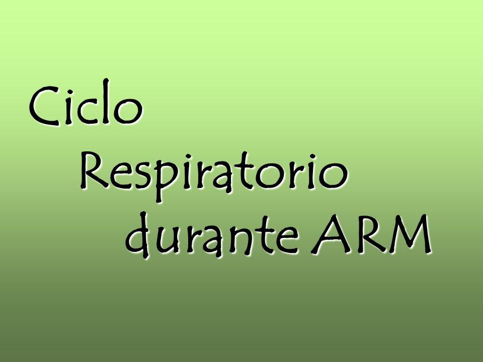 CicloRespiratorio durante ARM