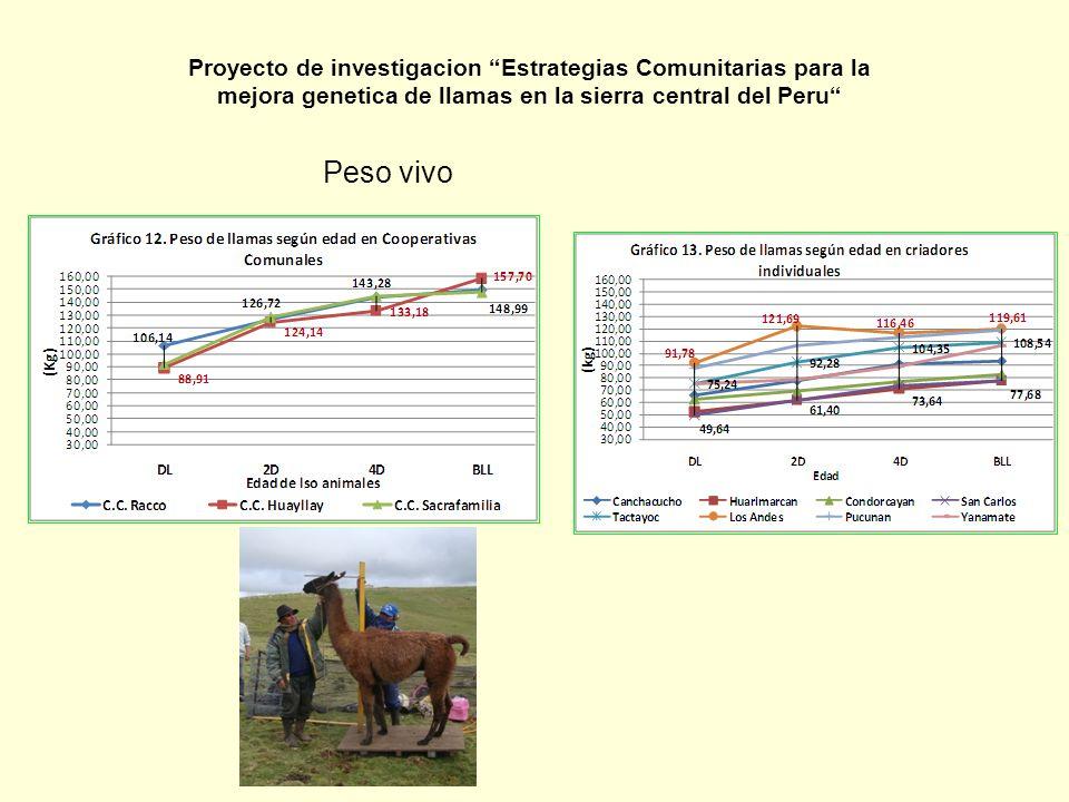 Peso vivo Proyecto de investigacion Estrategias Comunitarias para la mejora genetica de llamas en la sierra central del Peru