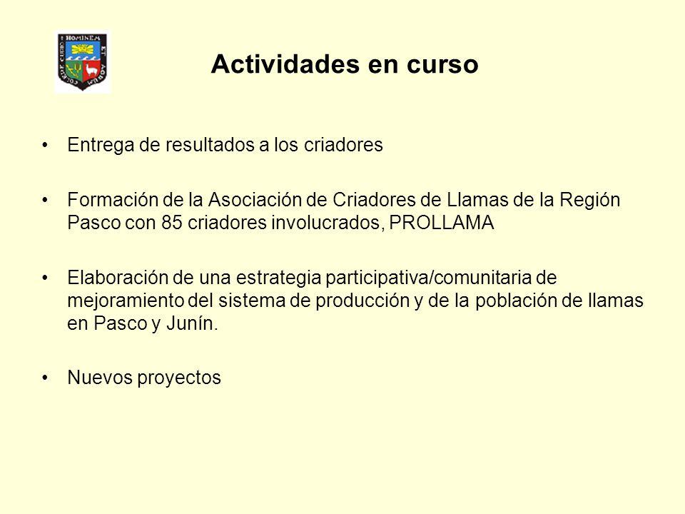 Actividades en curso Entrega de resultados a los criadores Formación de la Asociación de Criadores de Llamas de la Región Pasco con 85 criadores invol