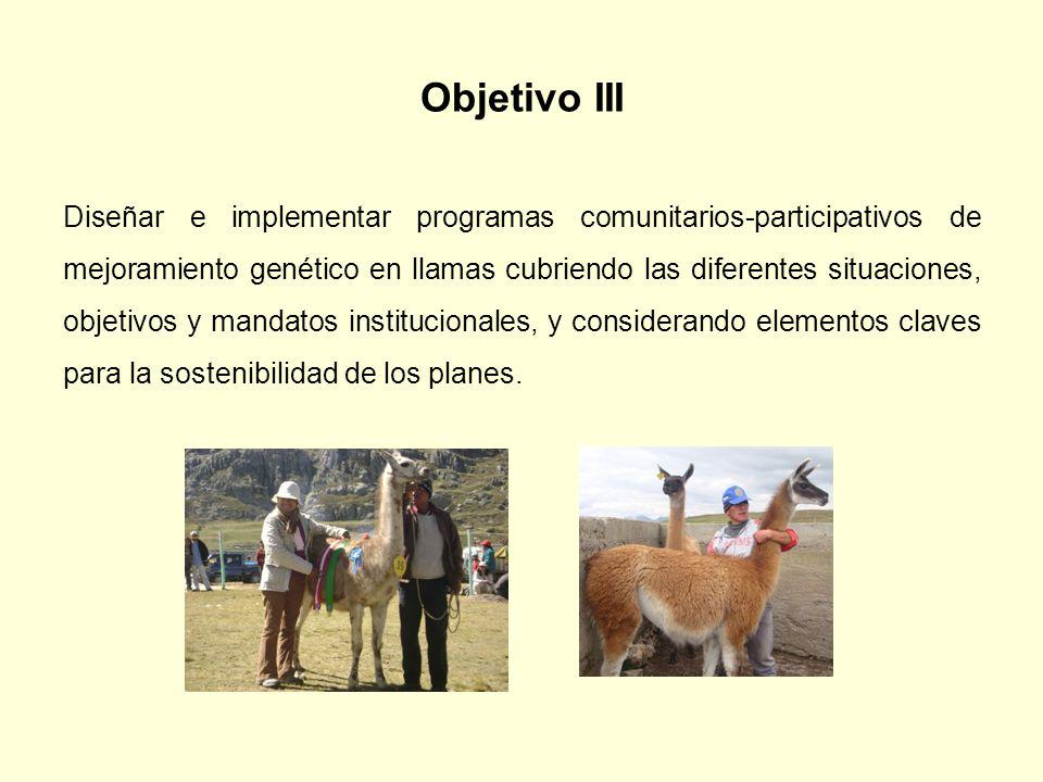 Objetivo III Diseñar e implementar programas comunitarios-participativos de mejoramiento genético en llamas cubriendo las diferentes situaciones, obje