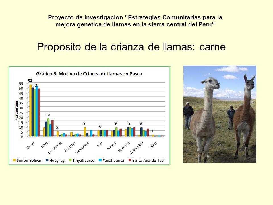 Sistemas de producción CaracterísticaCooperativa Comunal Granja Comunal AsociacionesIndividuales AnimalesOvinos, alpaca, llamas Ovino, alpaca Ovino, alpaca, llamas Propietario de las tierras Comunidad MiembrosComunerosLa comunidad Grupo de individuales- familias Individuales Destino de las utilidades MiembrosInversiones y servicios a la comunidad MiembrosIndividuales Proyecto de investigacion Estrategias Comunitarias para la mejora genetica de llamas en la sierra central del Peru
