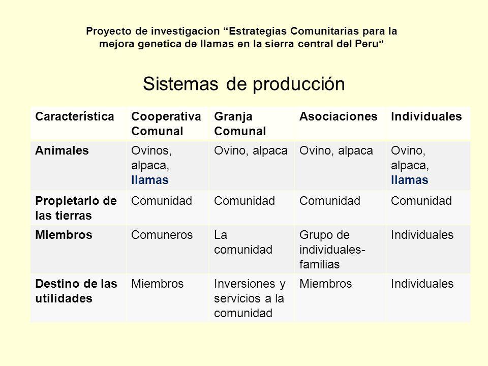 Promedio de tamaño del rebaño de pequeños criadores en Pasco EspecieZona 1Zona 2 Ovinos9591 Llamas4534 Alpacas6854 Vacunos43 Proyecto de investigacion Estrategias Comunitarias para la mejora genetica de llamas en la sierra central del Peru