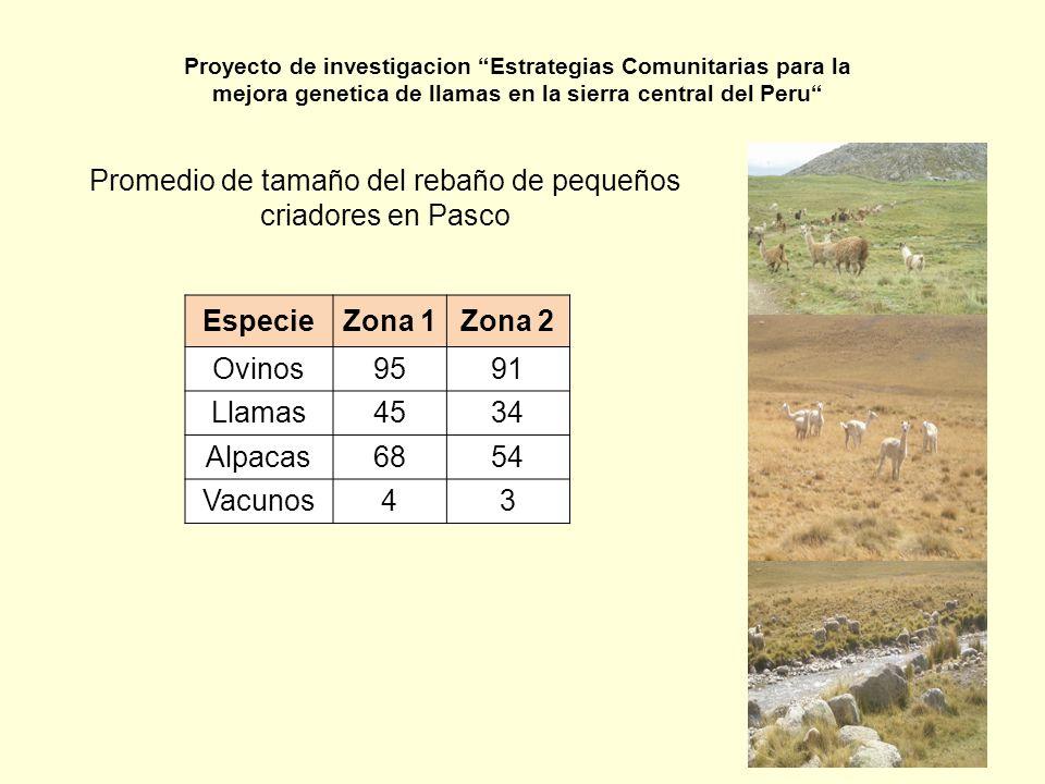 Promedio de tamaño del rebaño de pequeños criadores en Pasco EspecieZona 1Zona 2 Ovinos9591 Llamas4534 Alpacas6854 Vacunos43 Proyecto de investigacion
