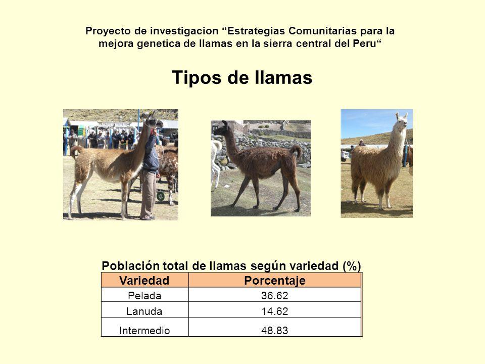 Tipos de llamas Población total de llamas según variedad (%) VariedadPorcentaje Pelada36.62 Lanuda14.62 Intermedio48.83 Proyecto de investigacion Estr