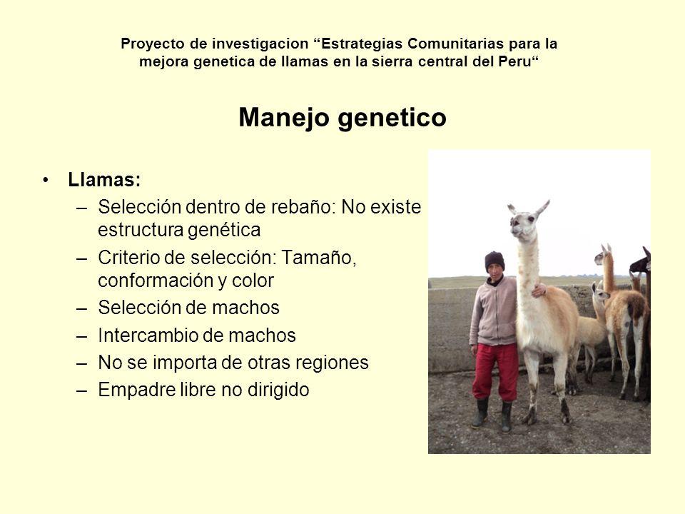 Manejo genetico Llamas: –Selección dentro de rebaño: No existe estructura genética –Criterio de selección: Tamaño, conformación y color –Selección de
