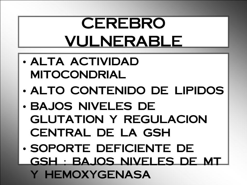 CEREBRO VULNERABLE ALTA ACTIVIDAD MITOCONDRIAL ALTO CONTENIDO DE LIPIDOS BAJOS NIVELES DE GLUTATION Y REGULACION CENTRAL DE LA GSH SOPORTE DEFICIENTE